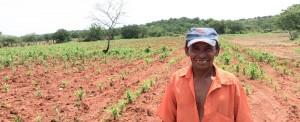 Sertão do Brasil: esperança que cresce verde