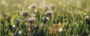 Itália: primavera e esperança